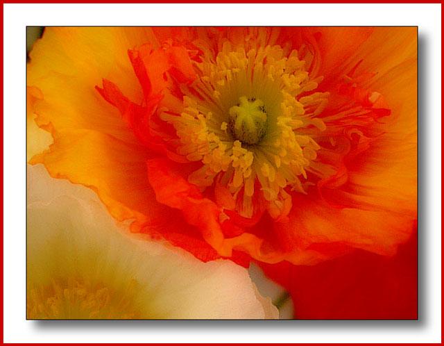 Silk - Photoshop soft focus