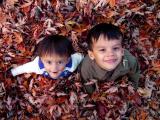 amarindarek in leaves