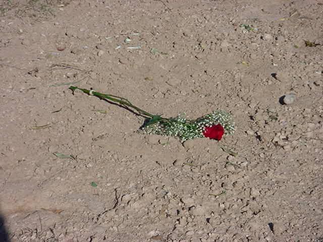 141. flower for Tarina