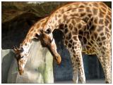 Bienvenue messieurs-dames (zoo de Vincennes)