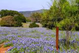 Field of Blue - Lower Willow  City Loop 2003