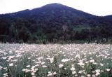Rwandan Field