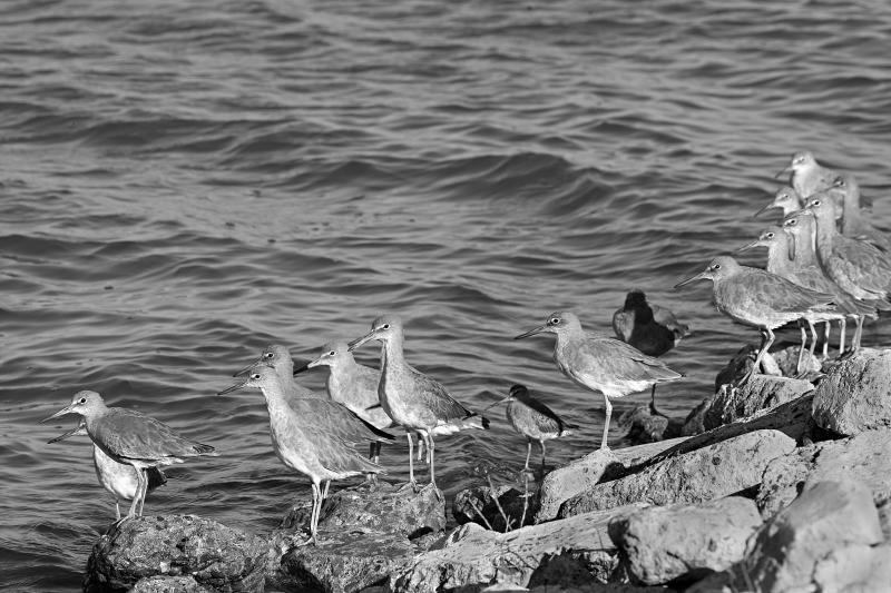 Staring Birds