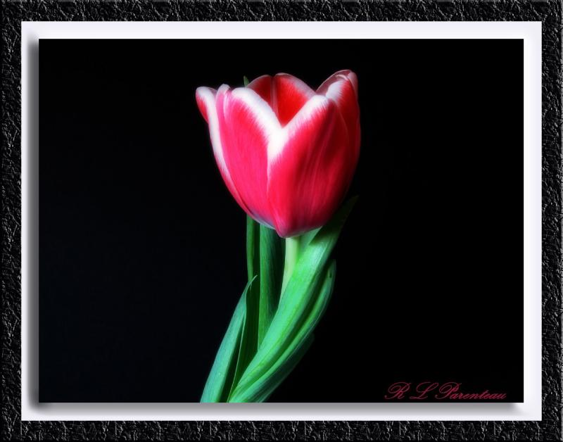 Tulip1diffuse float2.jpg