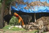 3India-1154.jpg