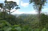 View Out over Rain Forest