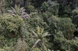 View from High up in the Tram in Rain Forest