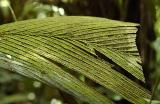 Moss on Palm