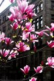 Blooms and buildings
