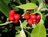 Berries in Washington Park