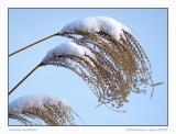 Snowy Burden