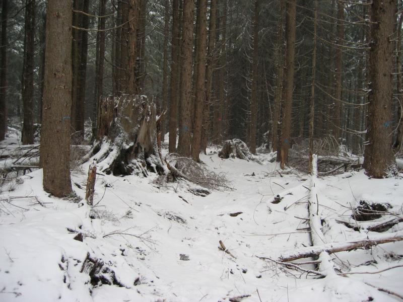 East Tiger Trail