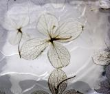 : Wax Flowers :