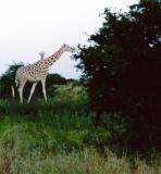 Africa 2000