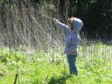 Planting sticks