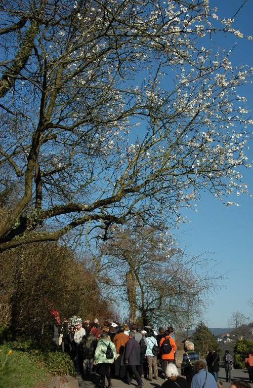 Many people love the blooming trees
