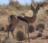 Namibia 2004 Fauna