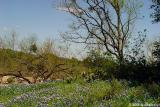 Hillside Bluebonnets  - Willow City Loop 2003