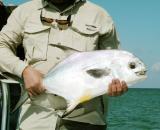 Turneffe Island (1), Belize 2003