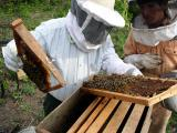 Bee keeping project in Yapacani