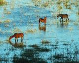 Water Ponies