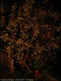 Pommier in the night. Octobre 2004.