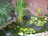 water pond, compliments of Jeff Croft