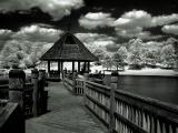 Infrared Pictures