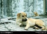 ¤@¤é¤ºªºª¯¹J/Met some stray  dogs in a day