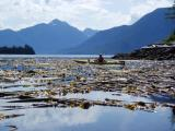 port hardy kayak- kayak the kelp