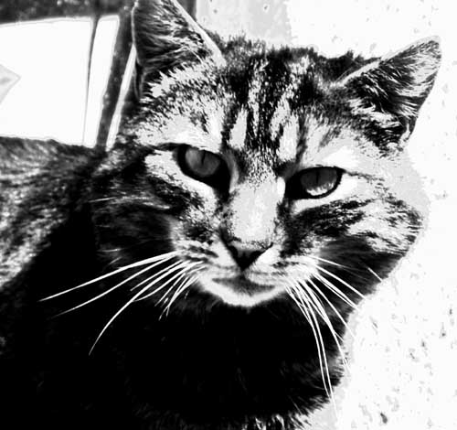 Susie-cat