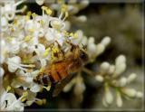 Really close-up bee