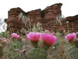 Flowers in the Desert