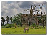 Florida safari