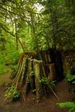 Nature Scenics