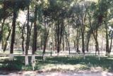 Alfargony park, Fergana