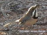 Birds and other Wildlife from Madagascar