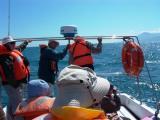 Whale watching in Tarifa