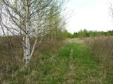 Spring here at the farm -- trail thru one of the fields