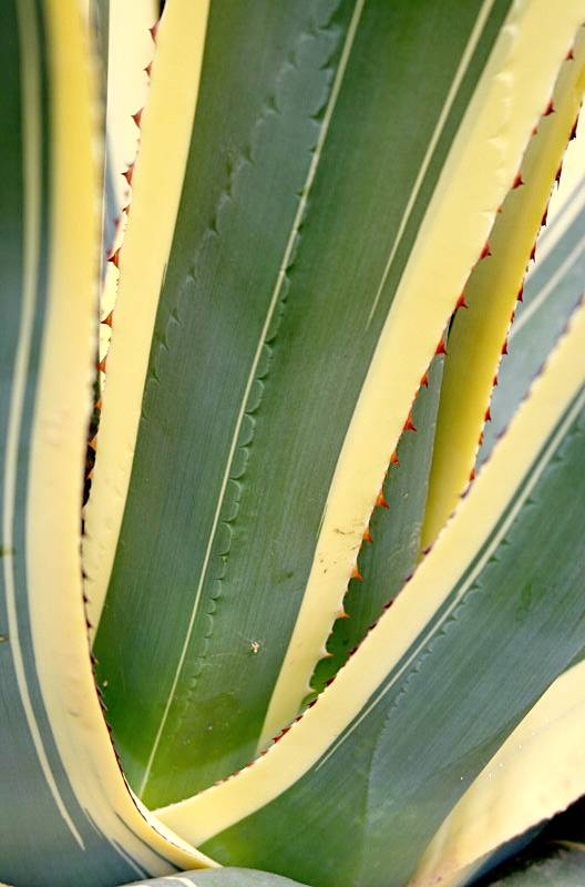 Cactus at Rambleshack