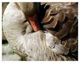 5/30: Mama Goose