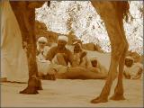 We - desert guests