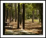 Babe in the Woodsds20050529_0176awF.jpg