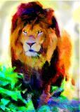 Simba,- my favorite wild lion...