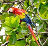 birds_of_costa_rica