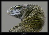 Reptiles (maj Avril06)