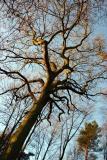 Friday Street Trees Part I
