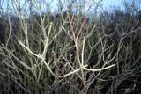 Newlands Corner Twigs