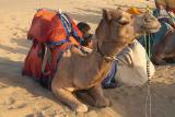 Ratik, My Camel