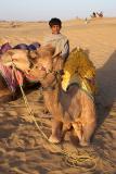 Lalu, Debby's Camel